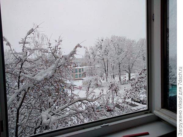 У открытого окна делаю зарядку, чтобы выглядеть красивой на любимой грядке!