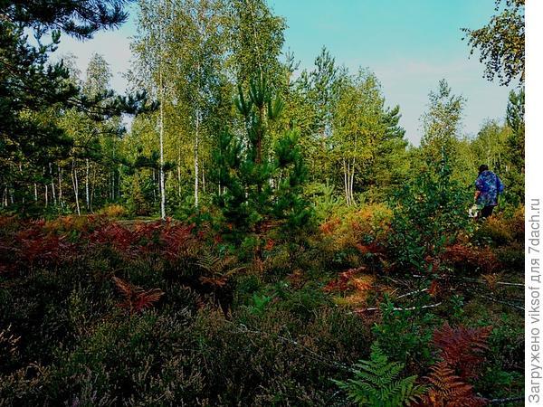 а это лесок, где растут грибы