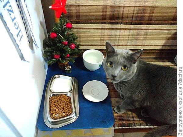 У кота ёлка своя! Однажды имела глупость украсила не только шариками, но и кошачьими витаминками