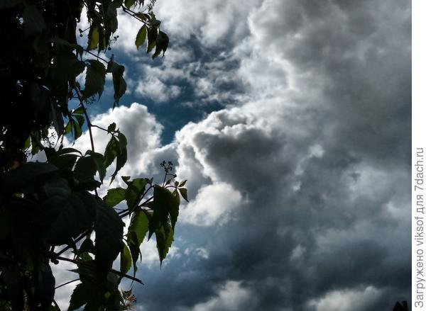 летнее перед грозой