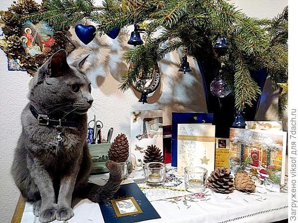 Витасу в эти праздники особенно повезло: ему и с колокольчиком ошейник подарили