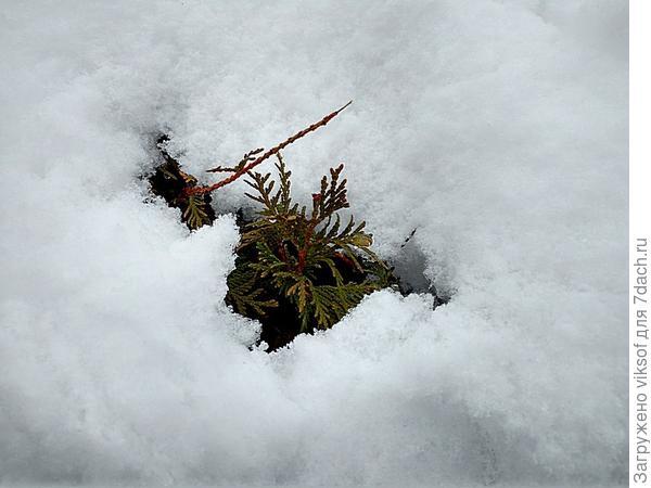и снег очень тёплый, пушистый