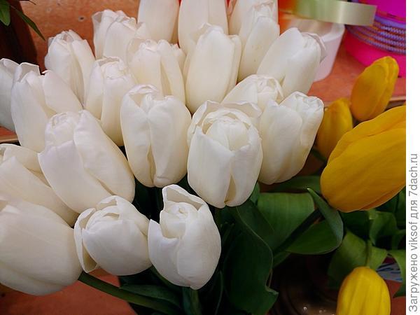 но Весна не за горами, в магазины привезли тюльпаны