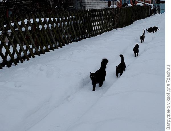 Счастливые коты нашего кооператива, их кормят, и сегодня то есть вчера их накормили дежурные сторожа. у них всегда есть запас еды