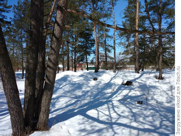 А тени от деревьев - это чудо чУдное, правда, Яночка! Да и снег ещё очень чистый