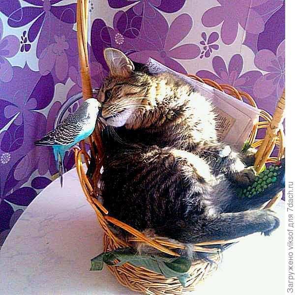 Знакомься, - Это любимый кот Дениса (фото Дениса в instagram)
