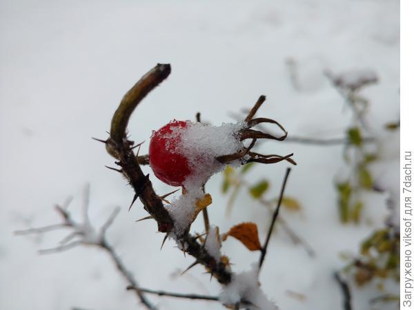 И с первым снежком!!!