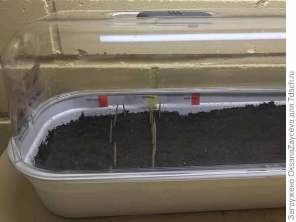 Мини тепличка с рядами посеянных семян