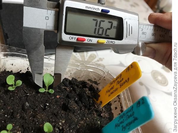 Размер настоящего листика