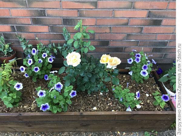 Вот такая полянка цветочков получилась у меня в июле