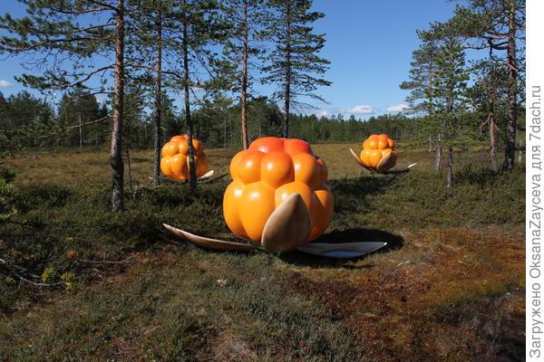 Памятник морошке на болоте в Рованиеми,  рядом с деревней Йоулу Пукки
