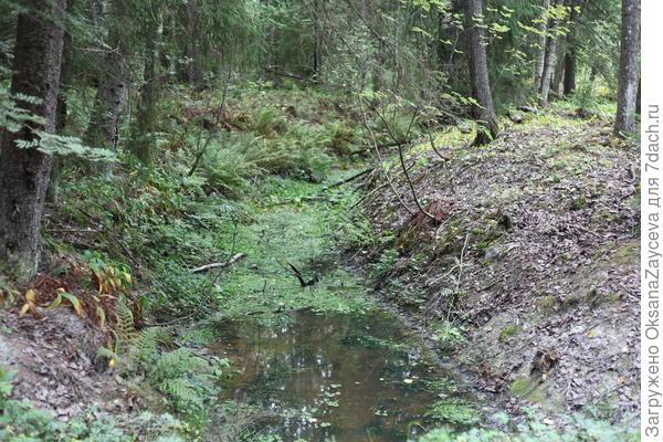 Вот еще одно заветное местечко. По правую сторону ручья - красненькие стоят, по левую сторону - беленькие!