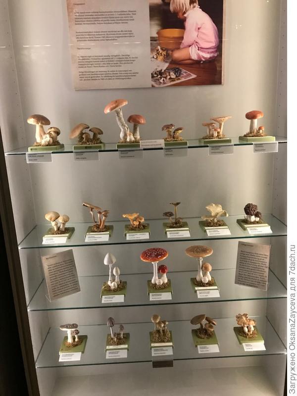 Вот такую витрину с грибами я нашла в музее природы Luomus в Хельсинки