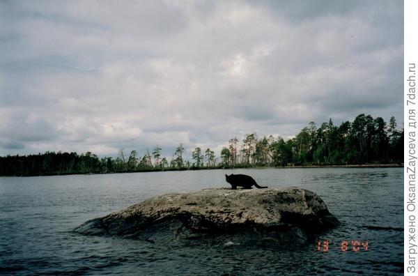 Собак в первый раз с нами плавал. Поторопился =) А Соня опытная, пока сгонять не начнут, сама с лодки не слезет =)