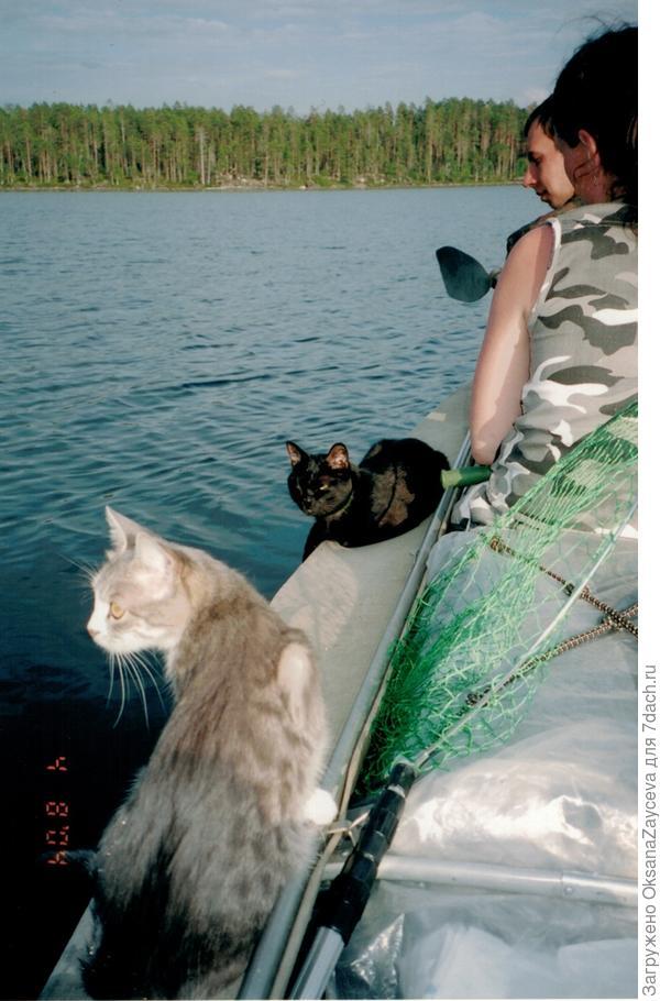 Ездили в Карелию двумя семьями, в каждой семье по коту. Моя серая Соня, второй черный Собак (молодой и агрессивный). Питались они рыбой и сухим кормом