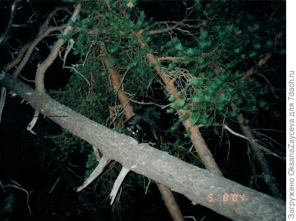 Собак учится лазать по деревьям. Наклонное - не страшно =)