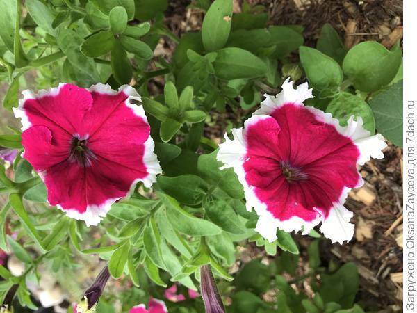 31 августа - расцветка нормализовалась