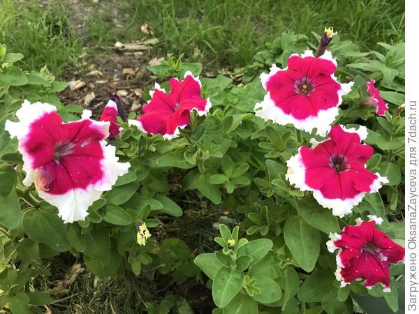 6 сентября, прекрасно цветут