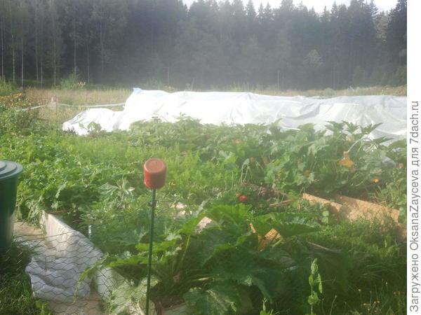 Вот это моя часть огорода