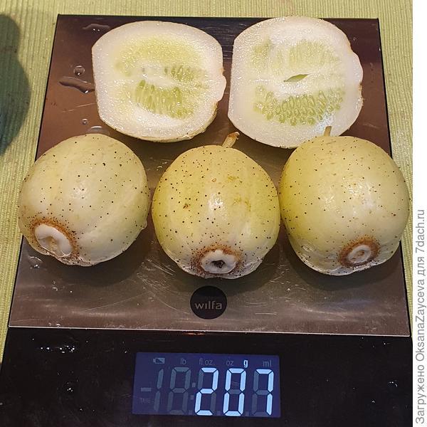Знакомьтесь - огурец 'Лимонный', или 'Хрустальное яблочко'