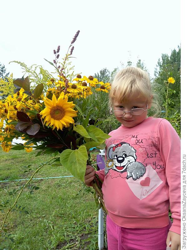 Подсолнечник 'Русский размер'. Цветение, плодоношение