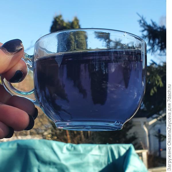 Чай из клитории тройчатой. Впечатления