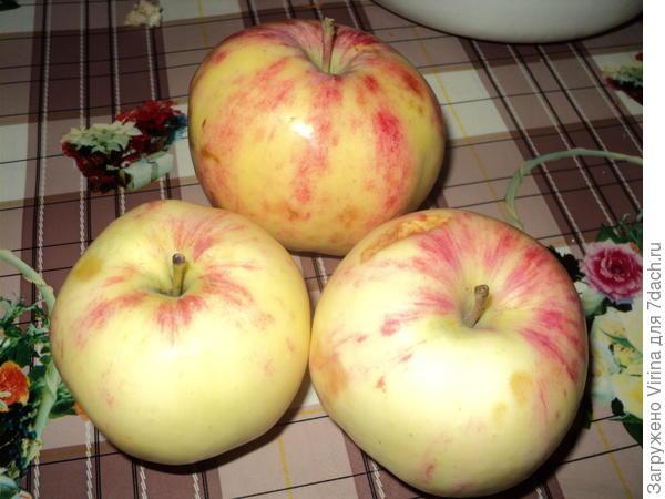 так вот тебе яблочко...
