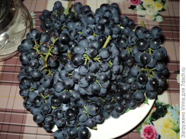 прошлогодний урожай винограда, любезно оставленный мне мышами