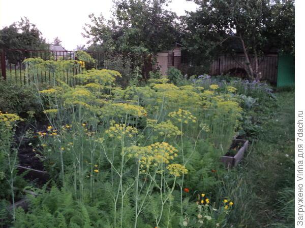 сад в зеленых тонах
