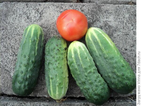 самый первый урожай