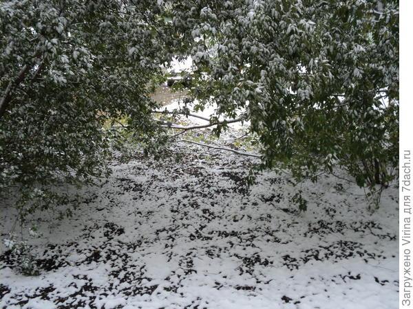 Первый снег на 1 октября