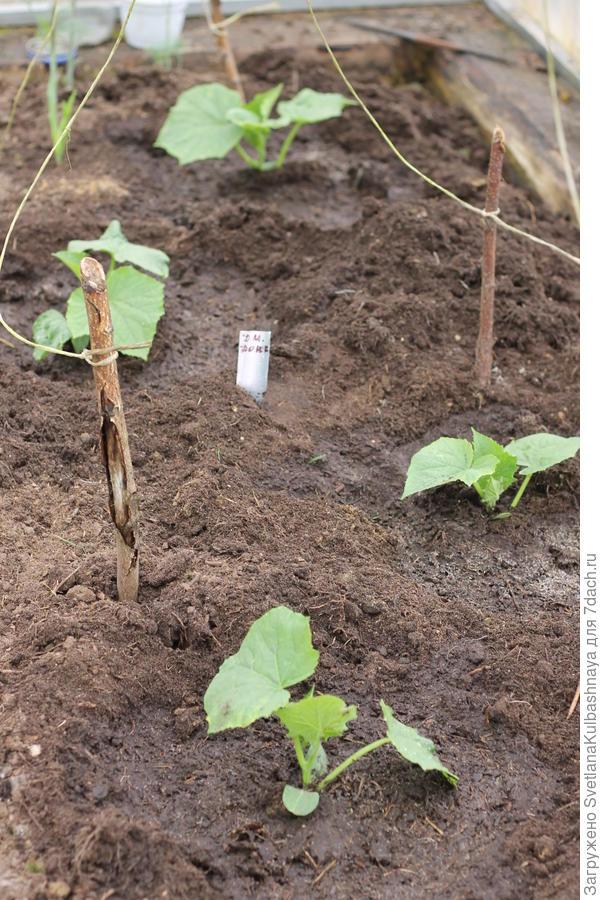 4 растения