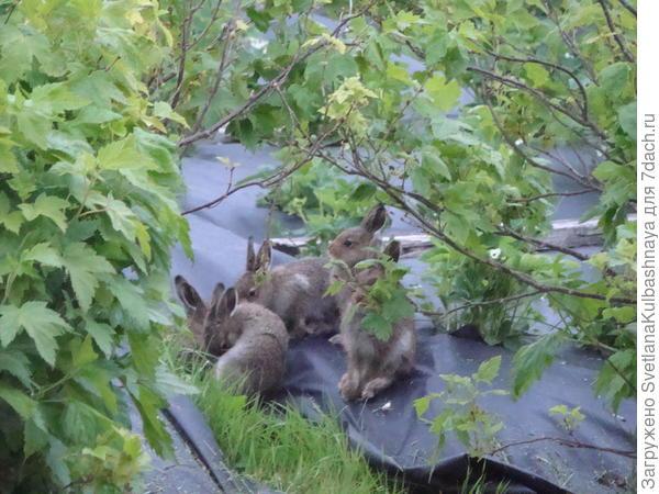 зайчики собираются в ожидании кормилицы
