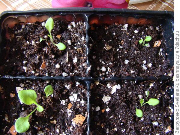 растения после пересадки