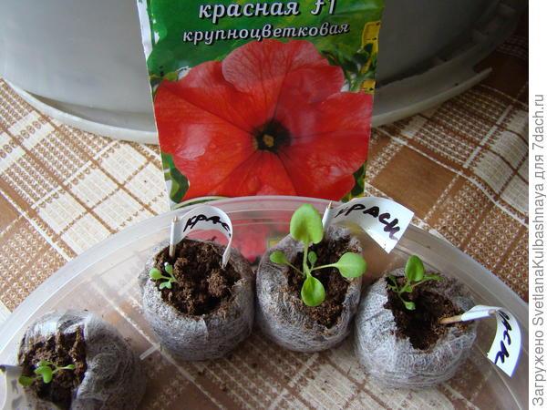 растения до пересадки