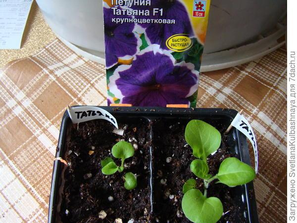 растения после персадки