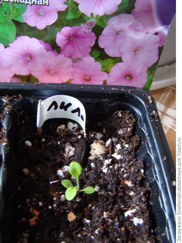 растение после пересадки
