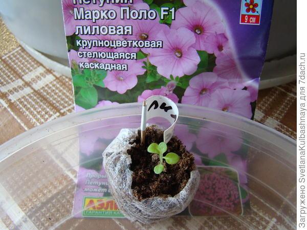 растение до пересадки