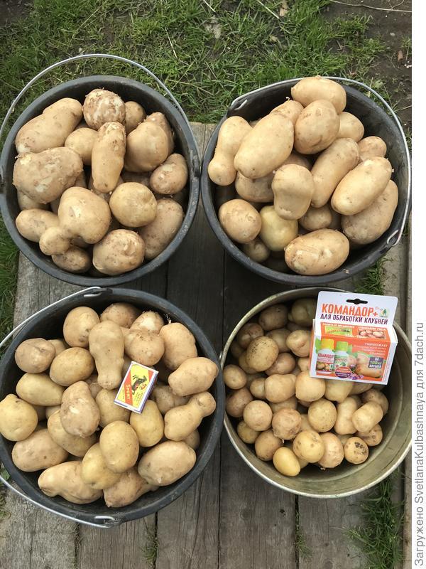 09.09.2018 обработанный картофель