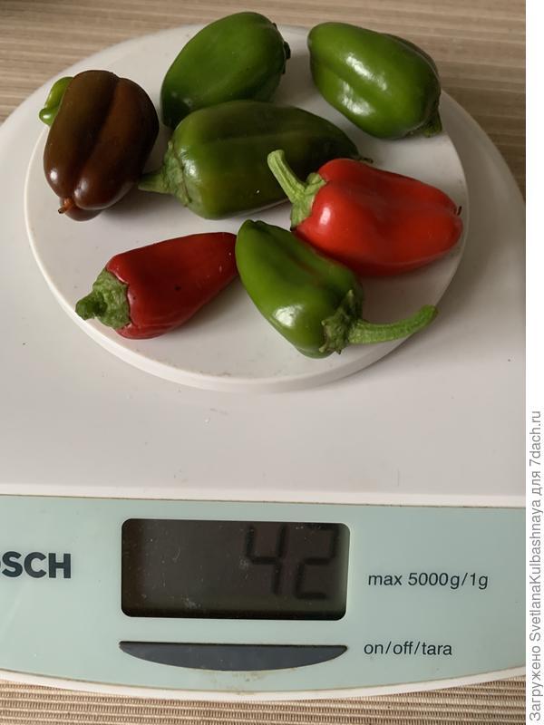 Перец сладкий 'Апельсин красный' F1 от агрофирмы «Русский огород».  Цветение, плодоношение, характеристика плодов, урожайности