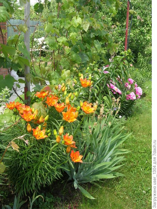 лилии и пионы