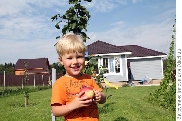Сын обожает яблоки
