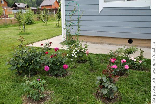 Июль. Цветут слева на право Хайди Клум, Баронесса и Флэшинг