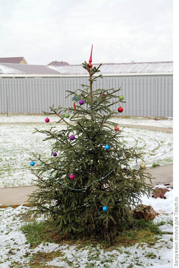А это скромная елочка на улице, даже снежком принарядилась