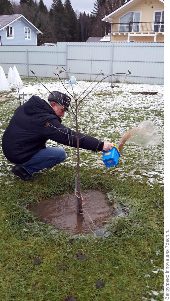 То воду из яблонь вычерпываем