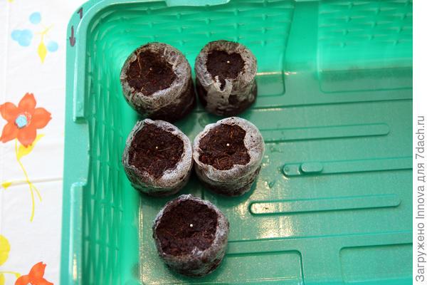 Таблетки размещены в одном контейнере с еще тремя сортами петуний. Дата посева 26.02