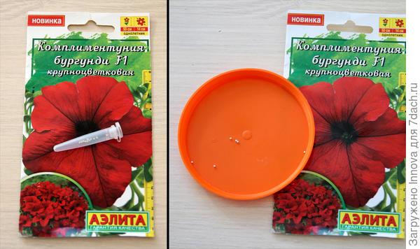 Дражированные семена петунии Комплиментуния F1 Бургунди