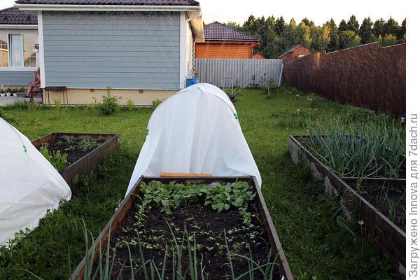 Работа Дождевателя со стороны огорода