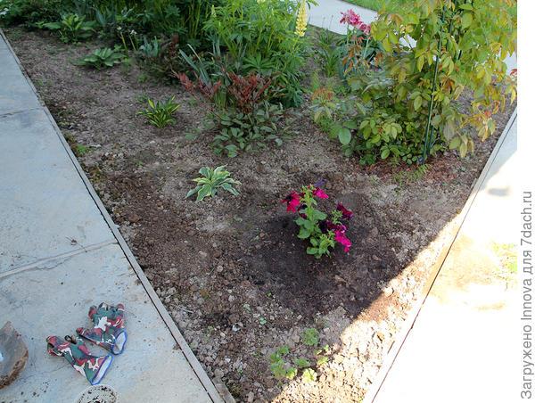 Вид с частью клумбы. В соседях хоста, плетистая роза и астильба