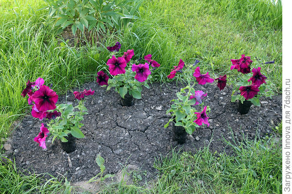 2 июня (86-й день от посева)